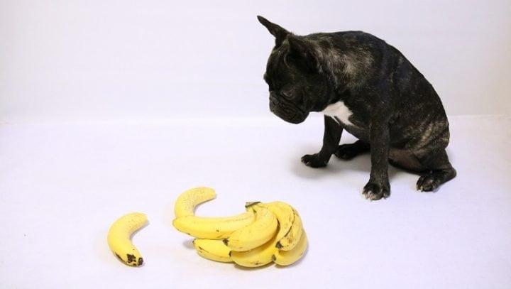 czy psy mogą jeść banany