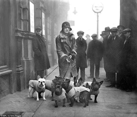 Pani R.A. Hopwood ze swoimi psami na French Open Bulldog Show, London (1929)