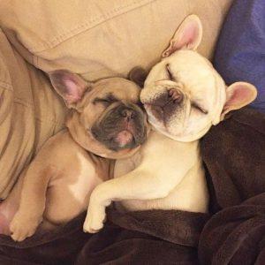 Czy psy śnią? Przewodnik po psim śnie
