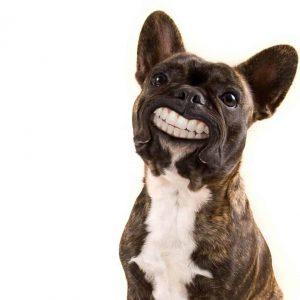 Jak dbać o psie zęby? 4 wskazówki