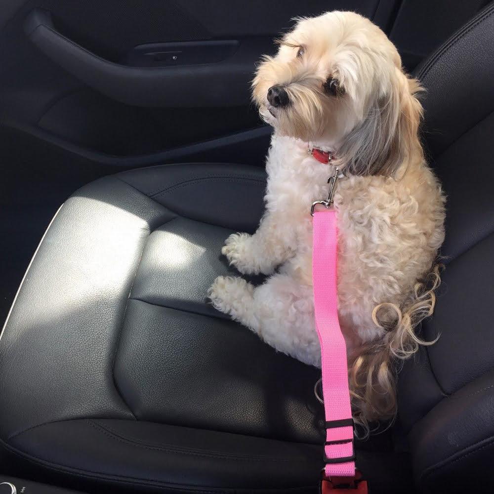 pas-samochodowy-dla-psa.jpg